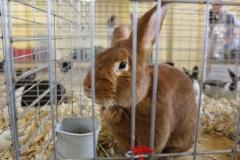 brown-bunny_8106670022_o