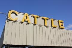 cattle_8106669186_o