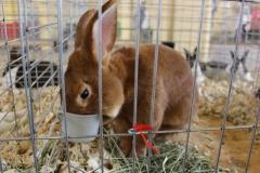 hungry-bunny_8106669734_o